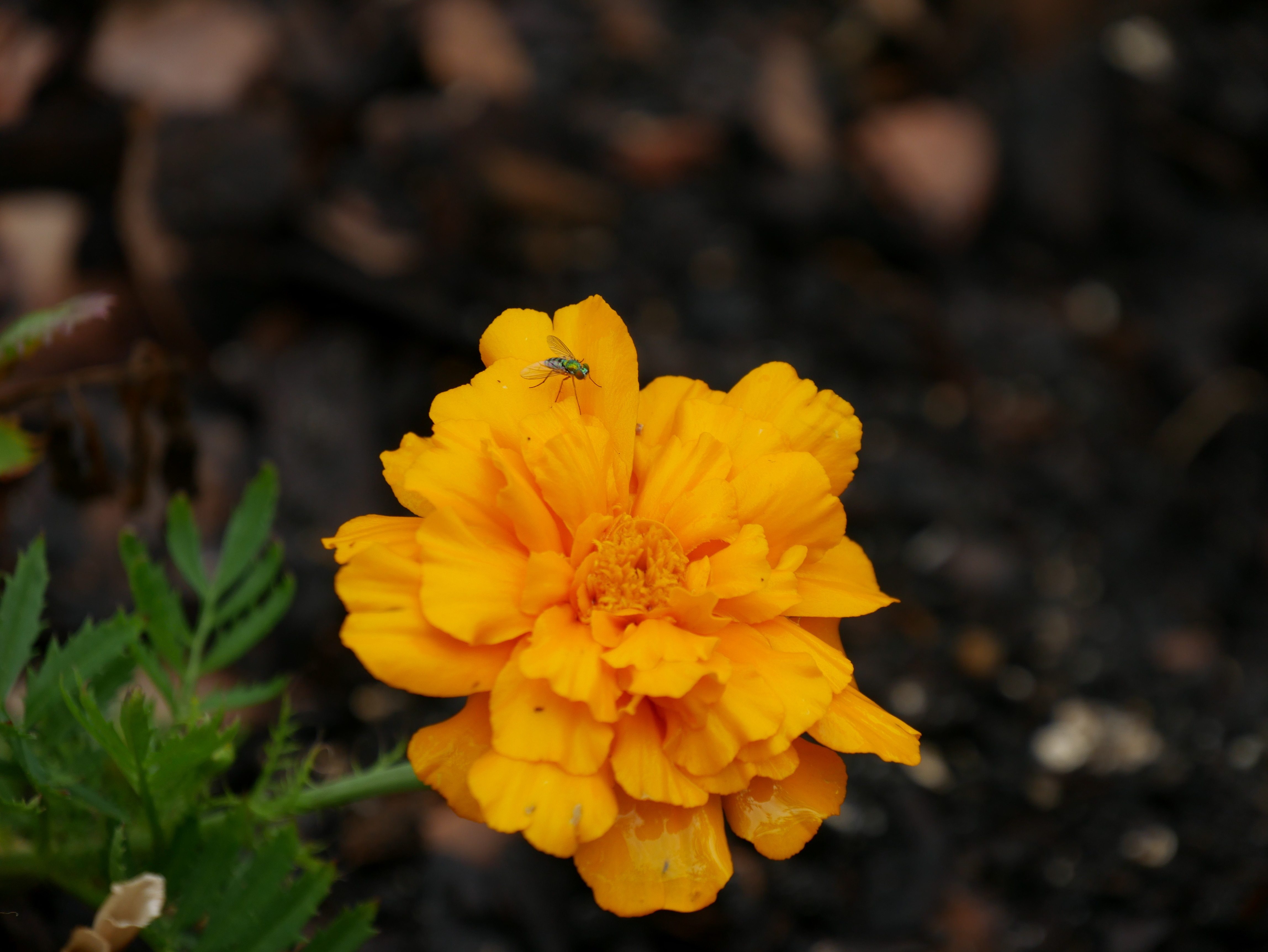 washinton gardens#1 (15 of 26)